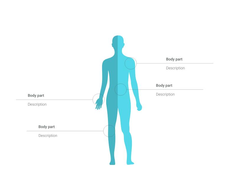 Human    Body    Maker     100 stunning chart types     Vizzlo